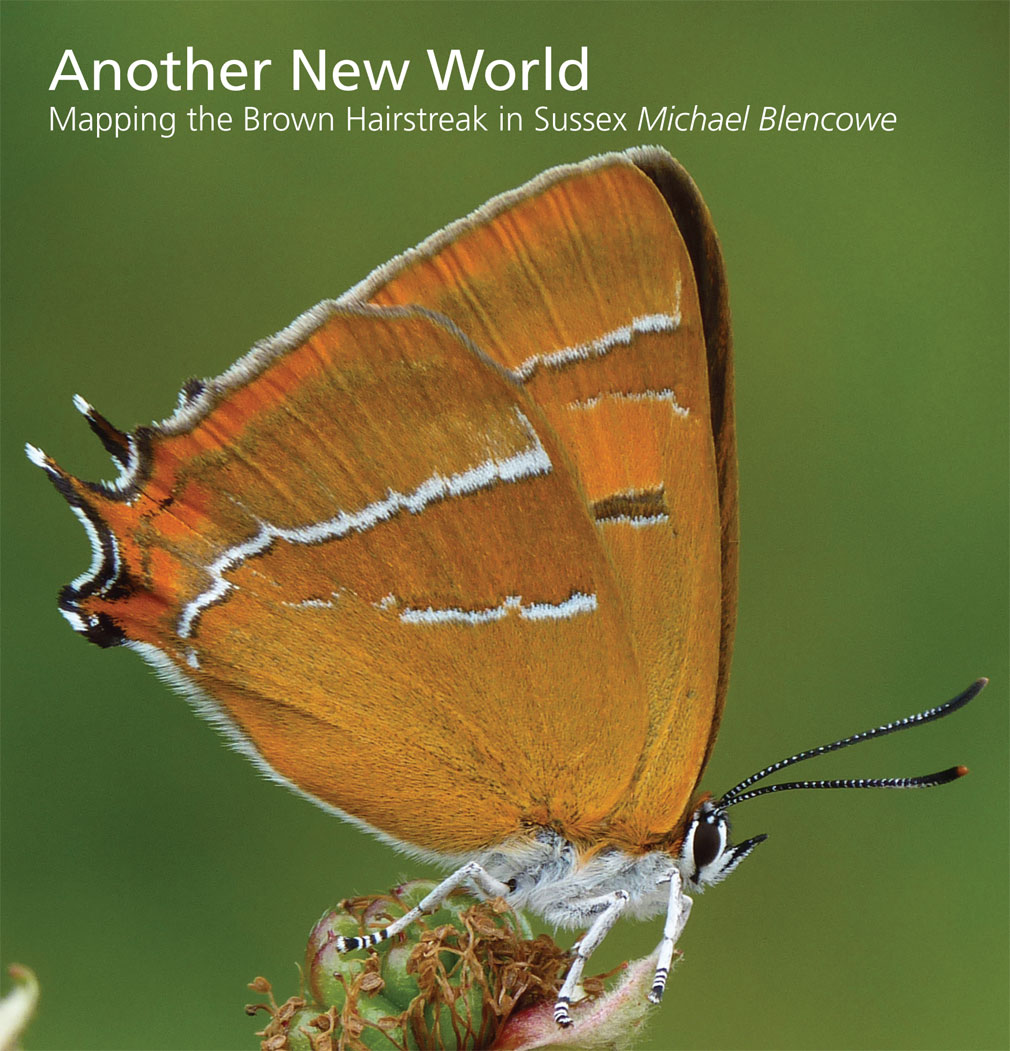 Mapping the Brown Hairstreak in Sussex