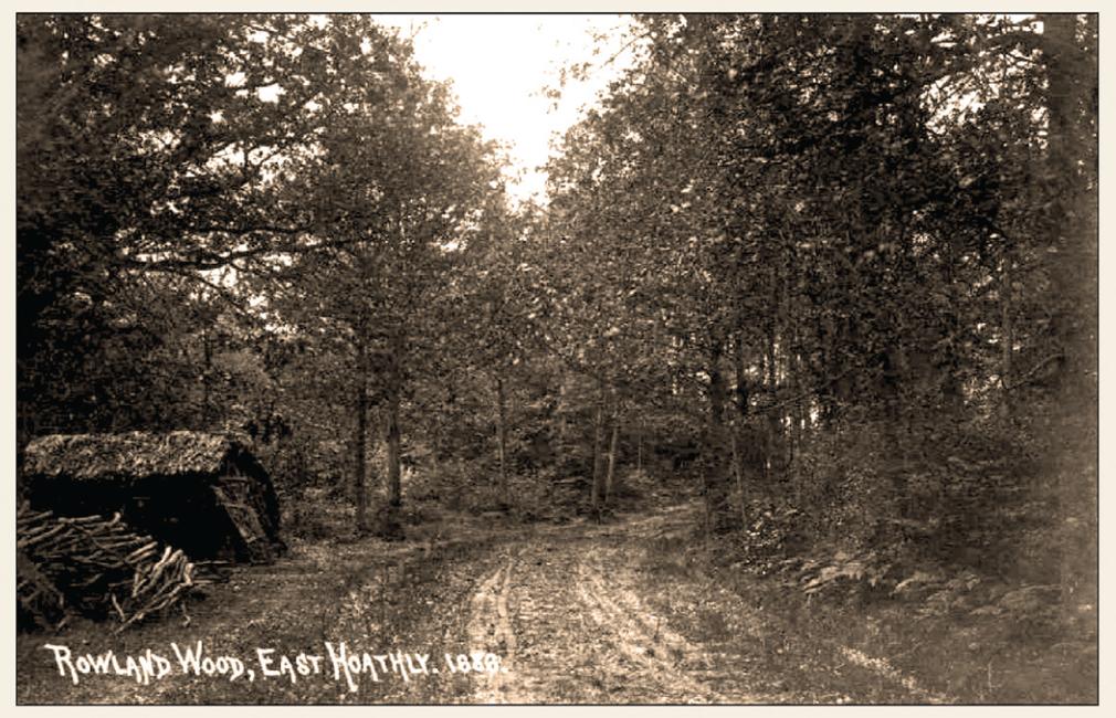Rowland Wood circa 1910