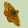 Fritillaries for the Future
